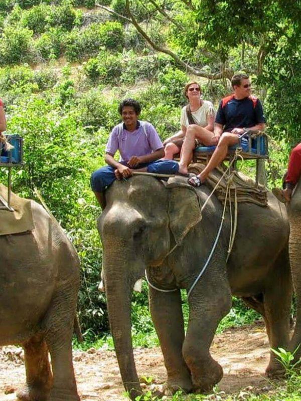 Elephant Safari Amer Jaipur