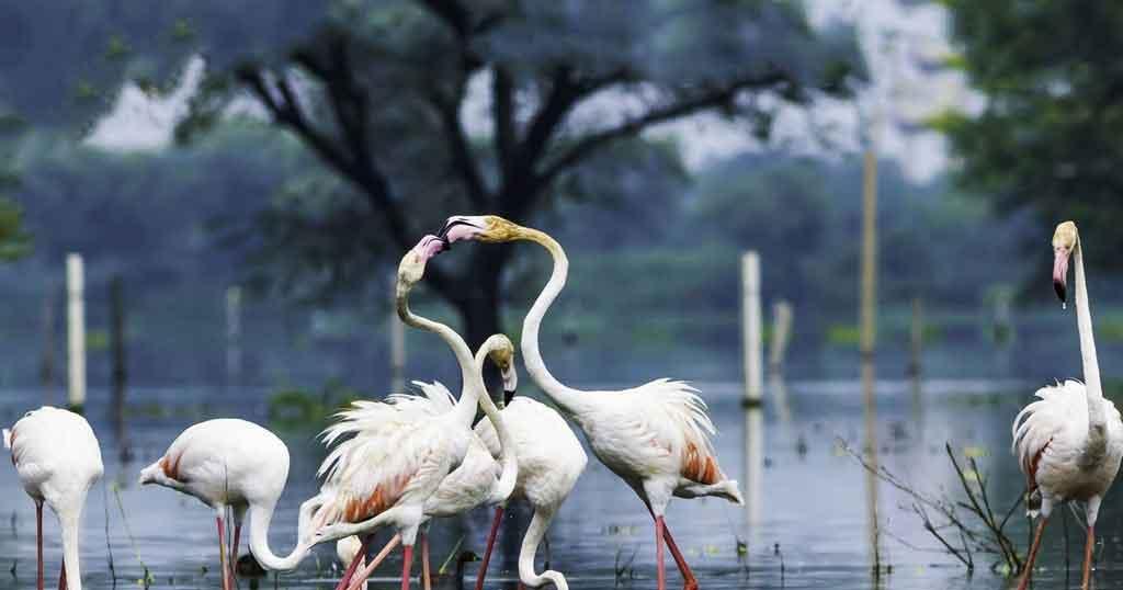 keoladeo-national-park-bharatpur